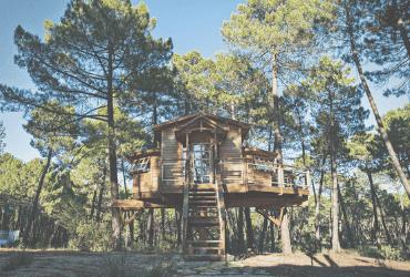 La casa del árbol - Osa de la Vega